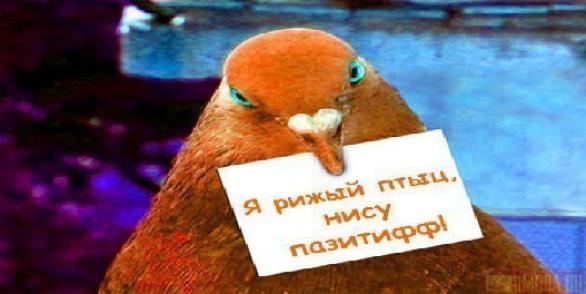 ржачные аватарки для контакта: